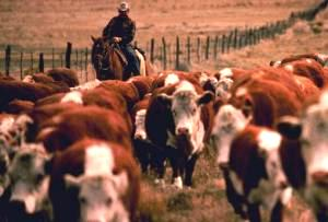 AU is a leader in ranching innovation.